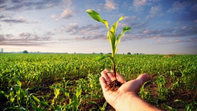 Институт экономики УрО РАН — за распространение технологий урбанизированного агропроизводства